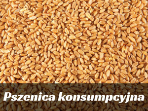http://www.dreamstime.com/stock-photography-wheat-seeds-image1392462